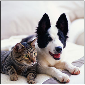 DogCatPets